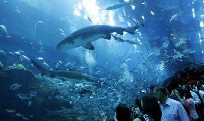 shark_tank_dubai