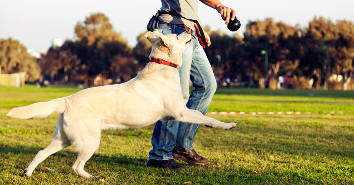 Can your Pet dog be a reason to evict tenants in Dubai?